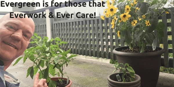 "picture of Dom Kotarski pointing at his pepper plant with his sunflower in the backgound with a caption that says ""Evergreen is for those that everwork and evercare!"