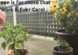 """picture of Dom Kotarski pointing at his pepper plant with his sunflower in the backgound with a caption that says """"Evergreen is for those that everwork and evercare!"""
